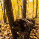 Fallen Tree - VideoHive Item for Sale