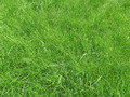 Green grass - PhotoDune Item for Sale