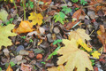 Autumn Still Life - PhotoDune Item for Sale