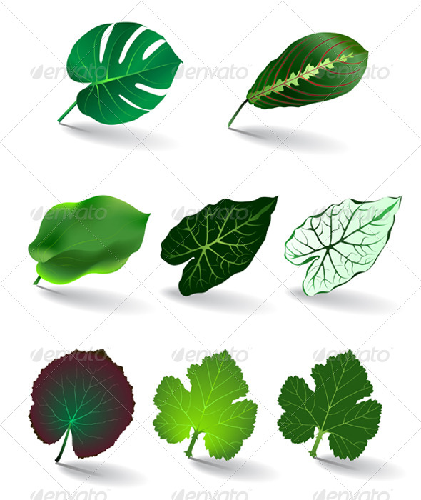 GraphicRiver Leaves Set 6039333