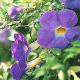 Violet Flower Sunset - VideoHive Item for Sale