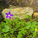 Flower with River in Background Time Lapse 4K  - VideoHive Item for Sale