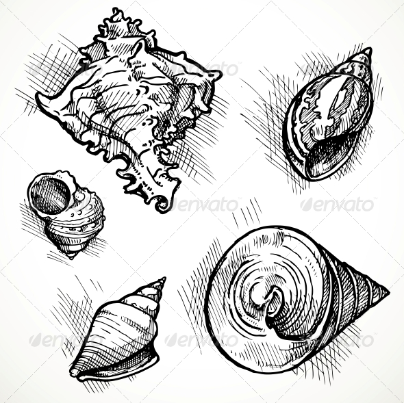GraphicRiver Set of Shell Sketches 6058746