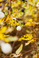 Fruit Symphoricarpos Albus in an Autumn Coat - PhotoDune Item for Sale