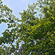 Under Tree Slider - VideoHive Item for Sale