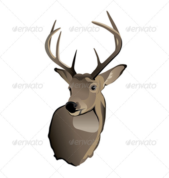 GraphicRiver Vector Trophy Whitetail Deer Buck 6070399