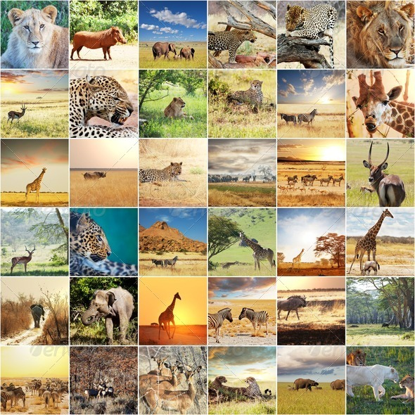 African safari - Stock Photo - Images