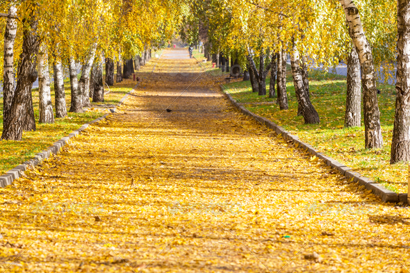Autumn alley - Stock Photo - Images