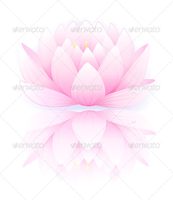 GraphicRiver Pink Lotus 6072944