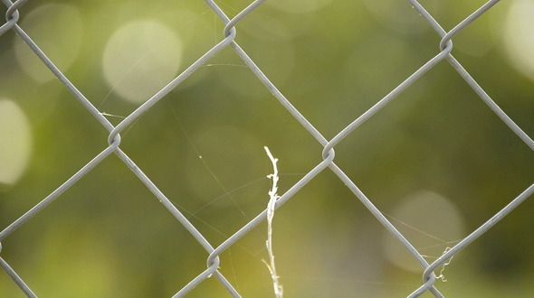 Wire Fence Close Up