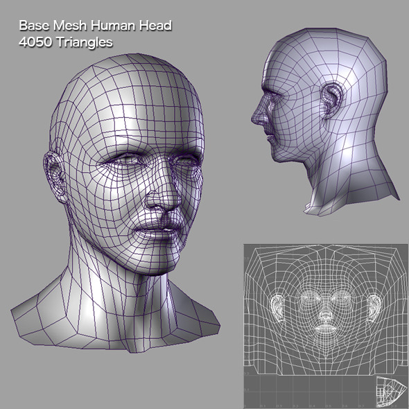 3DOcean Base Mesh Human Head 6058603