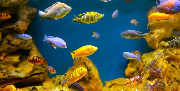 Coral Fish 4