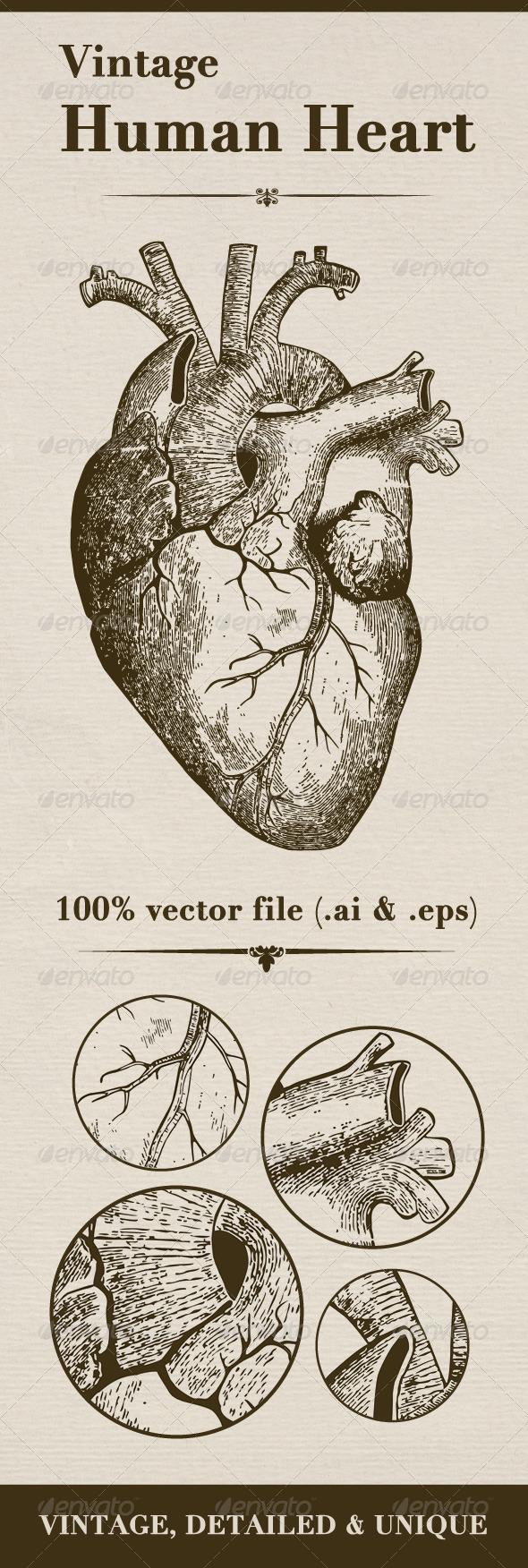 GraphicRiver Vintage Human Heart 6084413