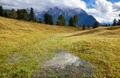 crocus flowers on alpine meadows