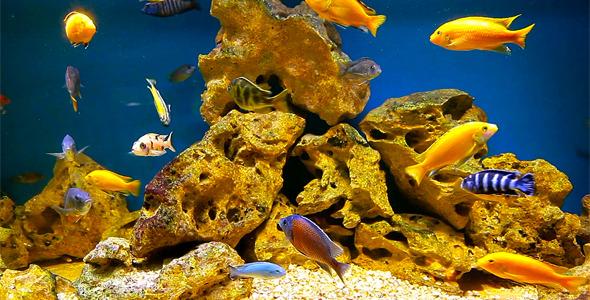 Coral Fish 8