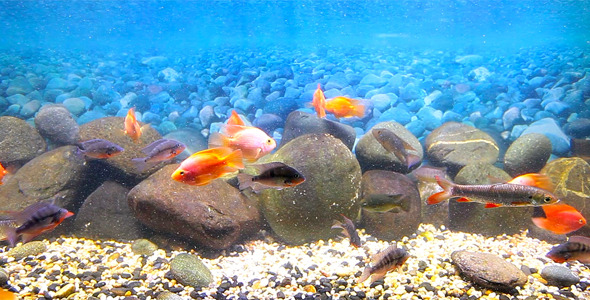 Coral Fish 14