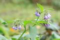 Blue Flowers - PhotoDune Item for Sale