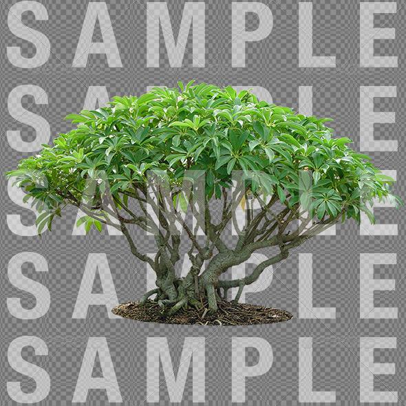 3DOcean plant 01 6123813