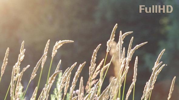 Grass in Sun Rays
