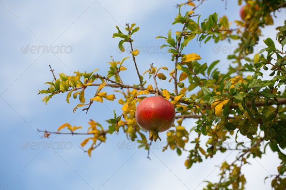 Fruit - Stock Photo - Images