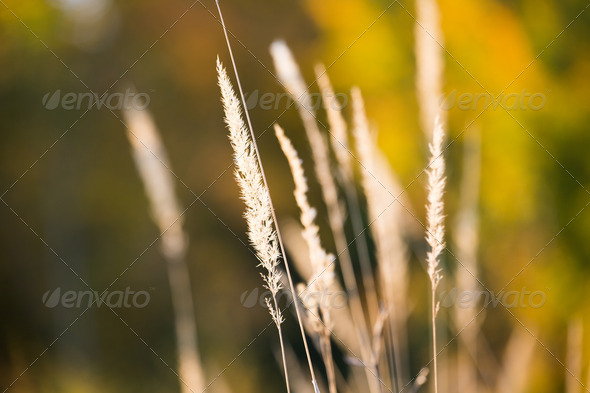 Grasses - Stock Photo - Images