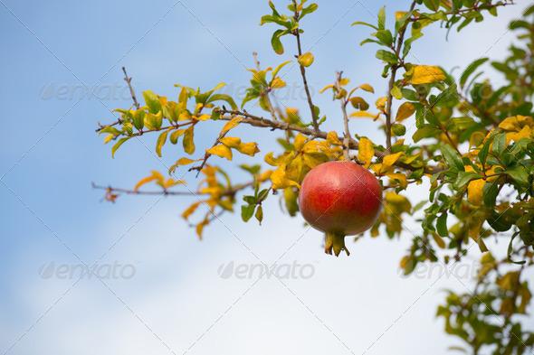 Fruit - Stock Photo - Images