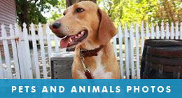 Pets and Domestic Animals Photos