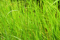 Jungle Grass Background - PhotoDune Item for Sale