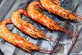 Shrimp grilled - PhotoDune Item for Sale