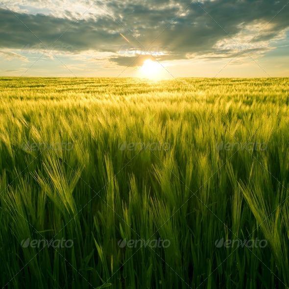 PhotoDune Field and sun 647720