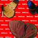 44 Different Species of Butterflies Part 2 - GraphicRiver Item for Sale
