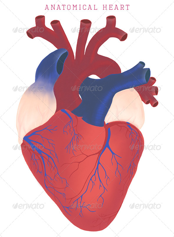 GraphicRiver Anatomical Heart 6220117