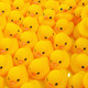 Rubber duck - PhotoDune Item for Sale