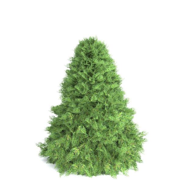 Conical juniper - 3DOcean Item for Sale