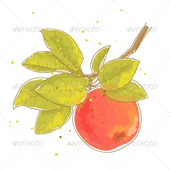 GraphicRiver Apple Branch 6252300
