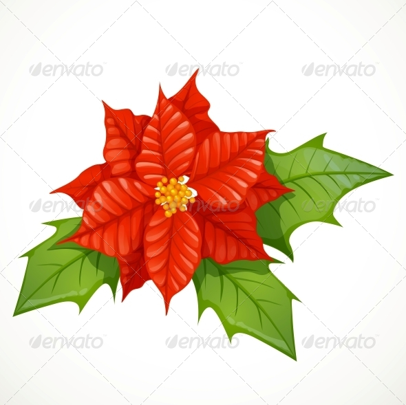 GraphicRiver Holly Flower Isolated 6254920