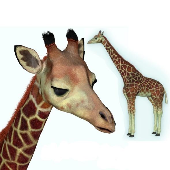 3DOcean Giraffe 6277005