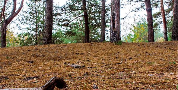 Majestic Sequoias 2