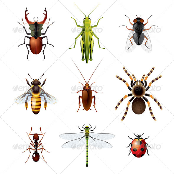 GraphicRiver Set of Insects on White Background 6293831
