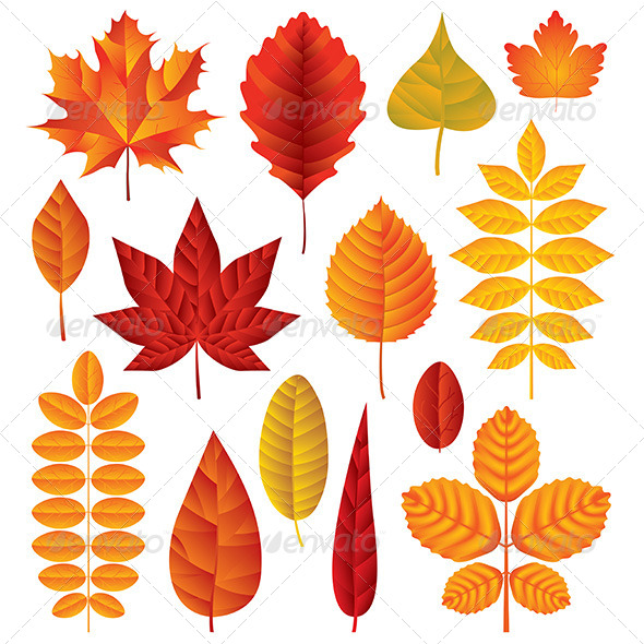 GraphicRiver Autumn Leaves Vector Set 6293833