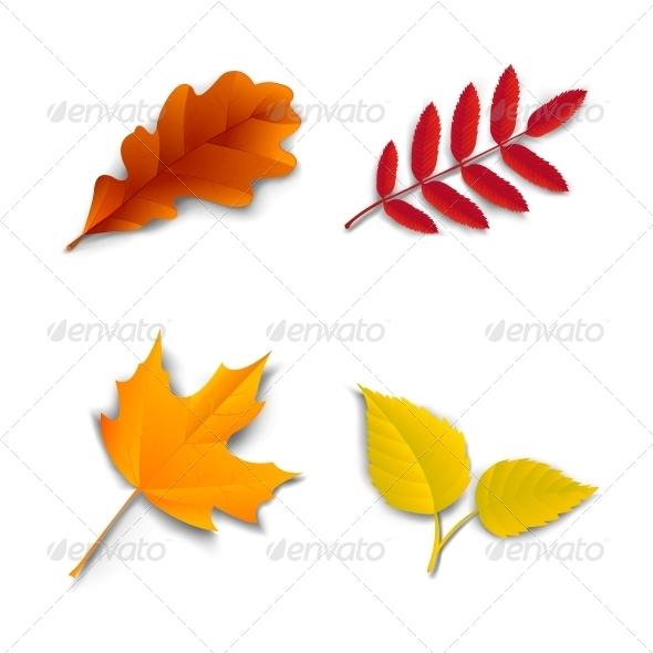 GraphicRiver Autumn Oak Maple Ash Birch Leaves 6295643