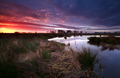 dramatic sunrise over swamp