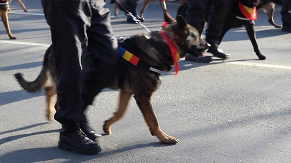 Dog Police Brigade