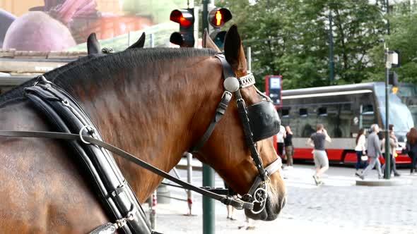 Prague City - Street hevoset, People, Traffic - Kaupunki Arkistofilmit