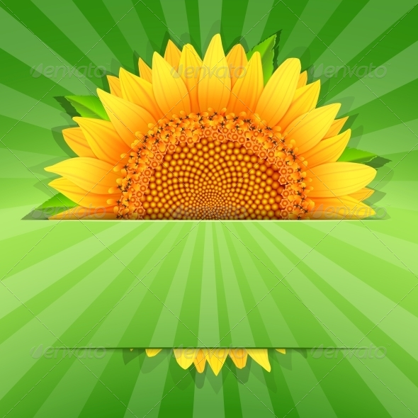 GraphicRiver Summer Sunflower Poster Template 6329111
