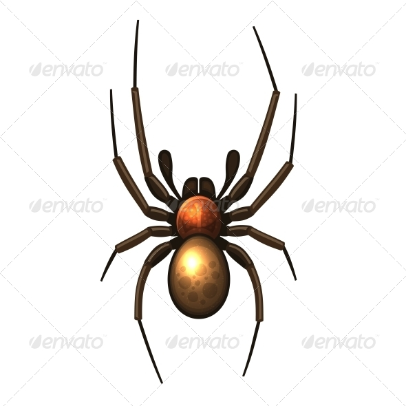GraphicRiver Spider 6329620