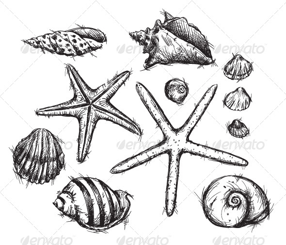 GraphicRiver Selection of Sea Shells Drawings 6332405