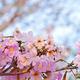 Pink sweet dream feeling - PhotoDune Item for Sale