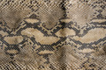 Texture of snake leather skin. - PhotoDune Item for Sale