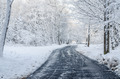 The road through the snowy morning park. - PhotoDune Item for Sale